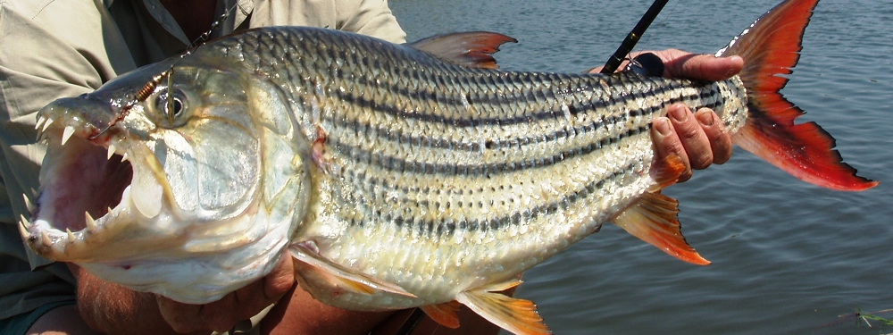 Shackletons, the Zambezi River's premier venue for trophy tigerfish